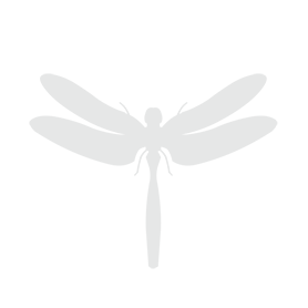 Logo Ingo Markert / RainGroup